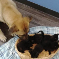 Cane randagio scalda cinque gattini orfani