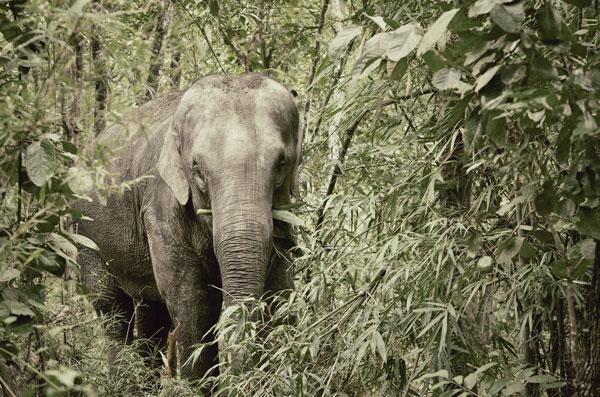 elefanti adolescenza