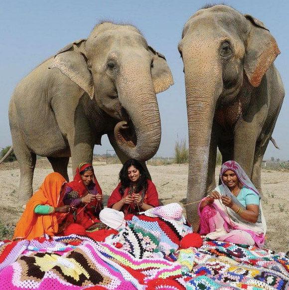 donne cuciono maglioni per elefanti