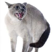 Gatti da guardia, fanno fuggire un ladro