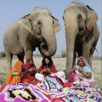 Elefanti indiani soffrono il freddo.
