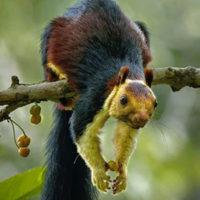 Lo scoiattolo arcobaleno