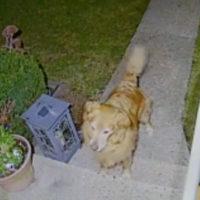 L'amore tra cani, appuntamenti e regali