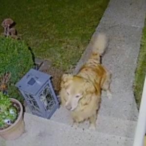 appuntamento cani thum