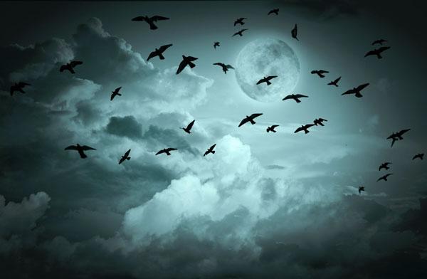 cielo con i corvi