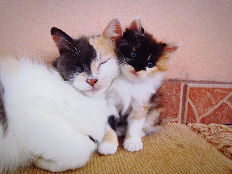 gatti innamorati