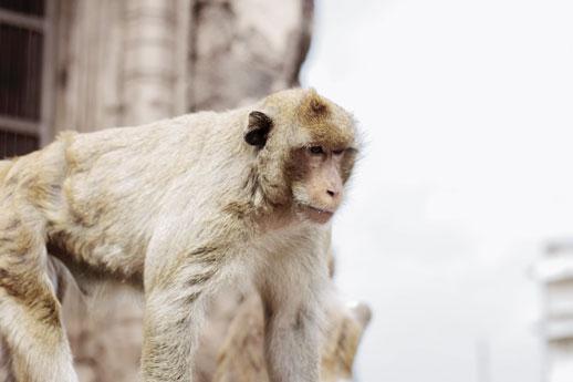 scimmia allo zoo
