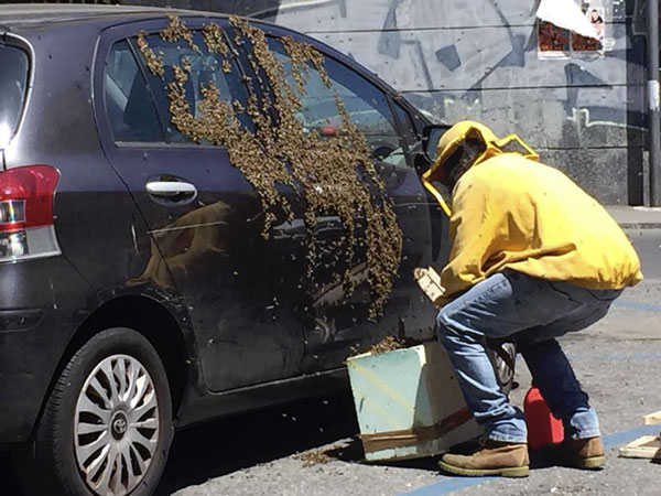 sarath salva le api 1